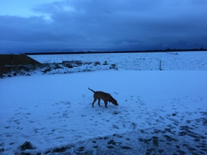 Major loving the snow